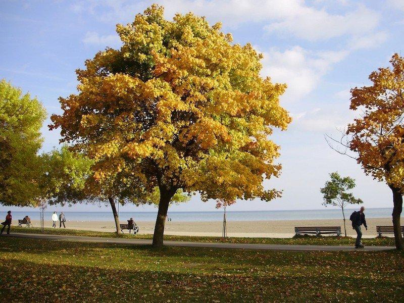 automne-toronto