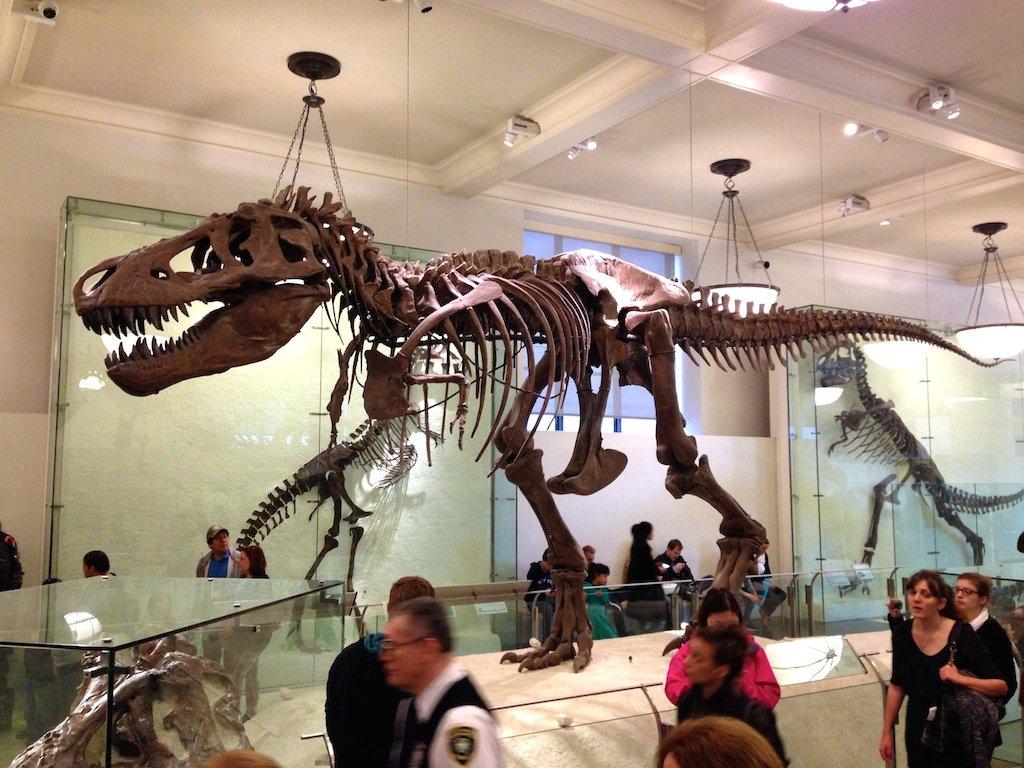 dinosaure-musee-d-histoire-naturelle-new-york